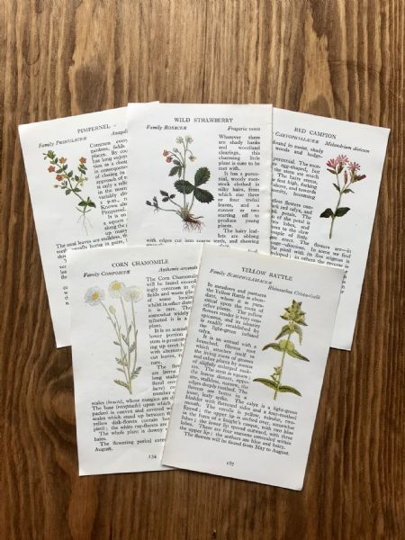5 Wild Flowers - Observer Book Pages